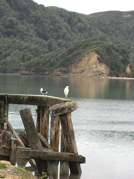 whanganui-inlet-05